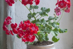 Nupukas lillepott